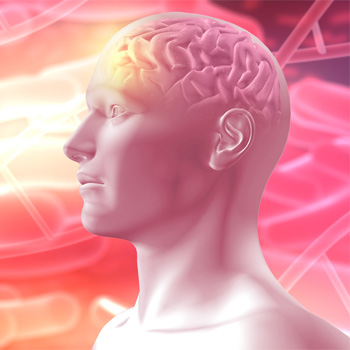 Booster le cerveau grâce à la phytothérapie